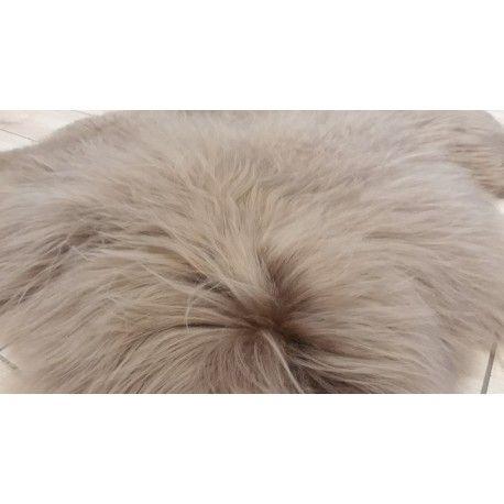 Długowłose islandy w kolorze CAPPUCCINO